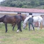Caballos en Luesia